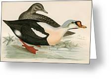 King Duck Greeting Card