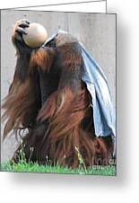 King Of The Ball Greeting Card