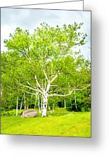 King Of The Birch Greeting Card