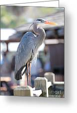King Of The Boardwalk Greeting Card