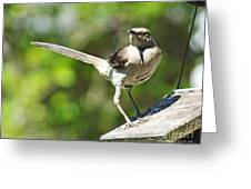 King Of The Feeder Greeting Card