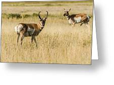 King Of The Herd Greeting Card