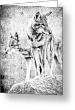 Alpha Male Black And White Greeting Card