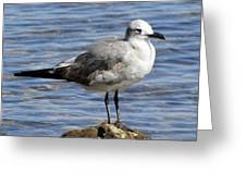 King Of The Rock Seagull Greeting Card