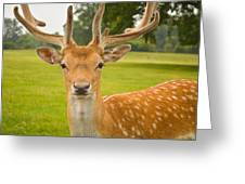 King Of The Spotted Deers Greeting Card