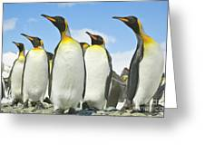 King Penguins Looking Greeting Card