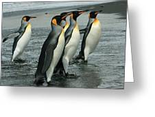 King Penguins Coming Ashore Greeting Card
