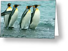 King Penguins Going To Sea Greeting Card