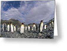 King Penguins On Rocky Beach South Greeting Card