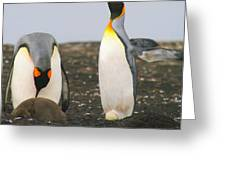 King Penguins With Chick And Egg Greeting Card