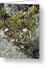 King Protea Bush 1 Greeting Card