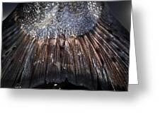King Salmon Tail Greeting Card