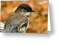 Kingbird Chillin Greeting Card