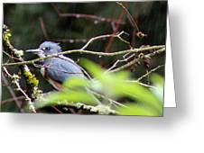 Kingfisher In The Rain Greeting Card