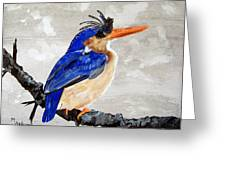 Kingfisher Greeting Card