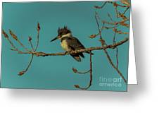 Kingfisher On Limb Greeting Card