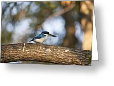 Kingfisher-top-end Australia Greeting Card