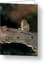 Kinglet On The Feed Greeting Card