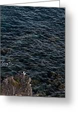 Seagulls At Cliffs Ready To Fish In Mediterranean Sea - Kings Of The World Greeting Card