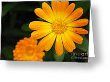 Kissed By Nature Greeting Card by Susan Hernandez