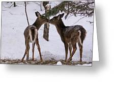 Kissing Deer Greeting Card
