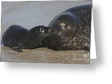 Kissing Seals Greeting Card