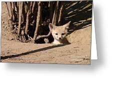 Kit Fox Pup Greeting Card