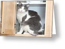 Kitchen Cubbard Cat Greeting Card
