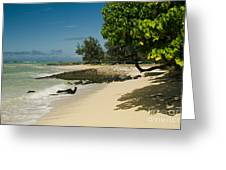 Kite Beach Kanaha Beach Maui Hawaii Greeting Card