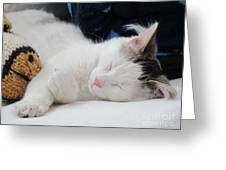 Kitten And Friend Finally At Rest Greeting Card