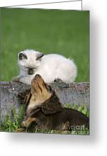 Kitten And Puppy Playing Greeting Card