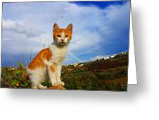 Kitten And Rainbow Greeting Card