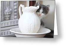 Kitten And The Picther Greeting Card