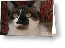 Kitten Black On Chocolate Silktapestrycatstm Greeting Card