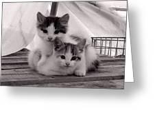 Kitten Cuddles Greeting Card