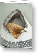 Kitten In An Igloo Greeting Card
