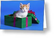 Kitten In Gift Box Greeting Card