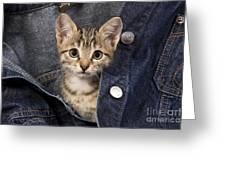 Kitten In Jean Jacket Greeting Card