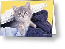 Kitten In Laundry Greeting Card