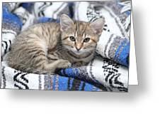 Kitten In The Blanket Greeting Card