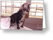 Kitten On Alert Greeting Card