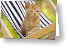 Kitten On Chair Greeting Card