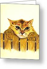 Kitten On Fence Greeting Card