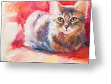 Kitten On Red Chair Greeting Card