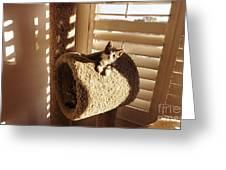 Kitten Peeks Through Hole In Condo Greeting Card