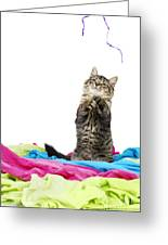 Kitten Playing With String Greeting Card