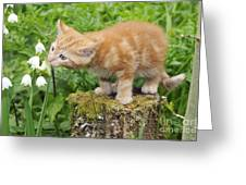 Kitten With Flowers Greeting Card