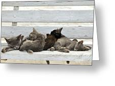 Kittens In Hydra Island Greeting Card