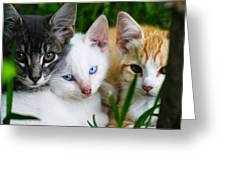 Kittens In The Cradle Greeting Card