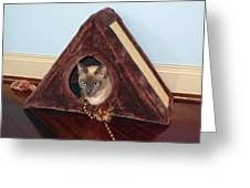 Kitty A-frame Greeting Card